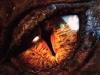 L\'occhio del drago